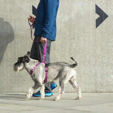 Harnais Dog Copenhagen Comfort Walk Air Violet